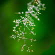 Morning dew. Shining water drops on grass over green forest — Stock Photo