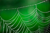 Morning dew. Shining water drops on spiderweb — Stock Photo