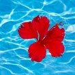 Stock Photo: Flower on water