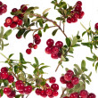 Stock Photo: Rip red cowberries background