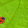 Red ladybird on green leaf — Stockfoto