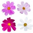 Set of four isolated flowers — Stock Photo #12356540