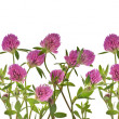 Clover pink flowers on white — Stock Photo