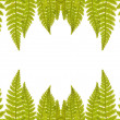 Green isolated fern frame — Stock Photo
