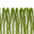 Isolated moss thicket - Stock Photo