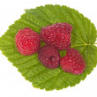 Four red ripe raspberry on green leaf — Stock Photo #12356960