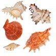 Set of shellfishes isolated on white — Stock Photo #12357152