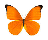 Tropical bright orange butterfly — Stock Photo