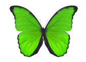 Isolated on white green butterfly — Stock Photo