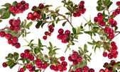 Rip red cowberries background — Stock Photo