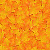 Red and yellow maple leaves background — Stock Photo