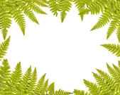 Green fern frame isolated on white — Stock Photo