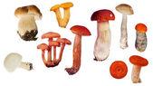 Zestaw na białym tle grzybów jadalnych — Zdjęcie stockowe