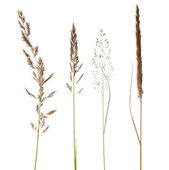 Sada isoalated suché trávy na bílém pozadí — Stock fotografie