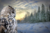 Owl on winter forest background — Stock Photo