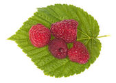 Four red ripe raspberry on green leaf — Stock Photo