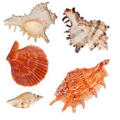 Set of shellfishes isolated on white — Stock Photo