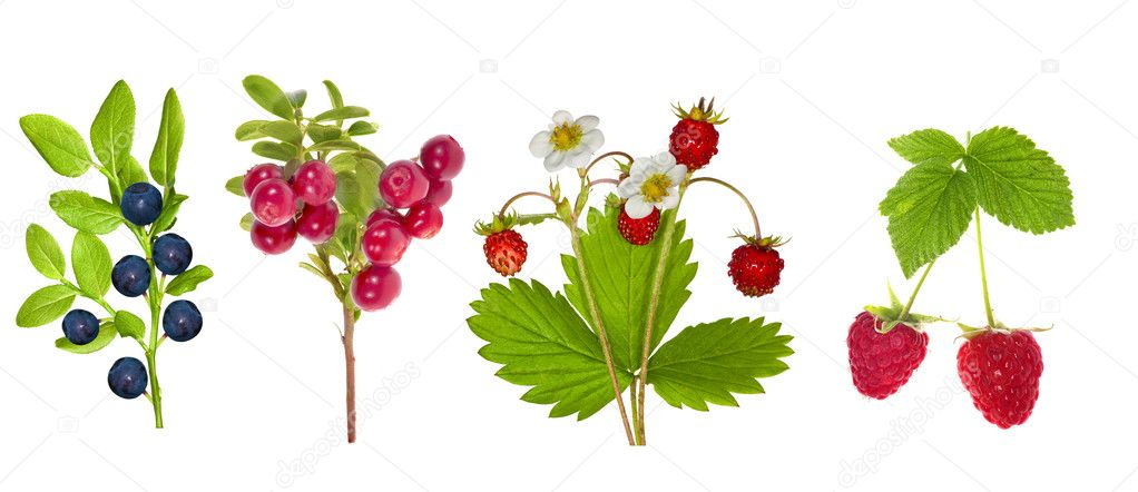 Set of forest berries isolated on white background — Stock Photo #12356570