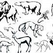 Collection of animals sketches — Stock Vector