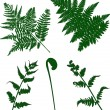 Set of green fern silhouettes — Vettoriali Stock