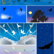 Stock Vector: Six compositions with birds flight