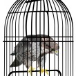 Eagle in cage illustration - Stock Vector