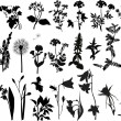 Collection of wild flowers silhouettes — Stock Vector #12357771