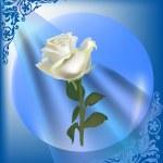 Single white rose flower in blue frame — Stock Vector
