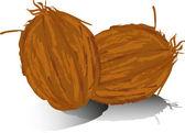 Dva kokosové izolovaných na bílém pozadí — Stock vektor