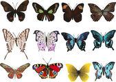 Dwanaście różnych motyle na białym tle — Wektor stockowy
