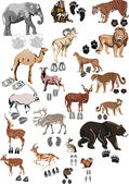 Color animals collection with tracks — Stock Vector