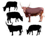 Bull and cows isolated on white — Stock Vector