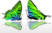 Two green and blue butterflies — Stock Vector