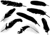 Eght black feathers on white — Stock Vector