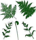 Sada zelené kapradí siluety — Stock vektor