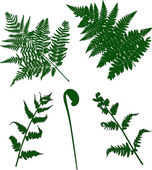 Set of green fern silhouettes — Stok Vektör