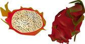 Isolated dragon fruit illustration — Stock Vector