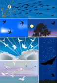 Six compositions with birds flight — Stock Vector
