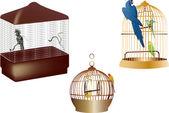 Papoušci v klecích izolovaných na bílém — Stock vektor