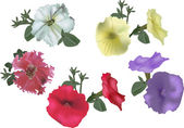 Set of petunia flowers isolated on white — Stock Vector