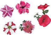 Set of pink petunia flowers — Stock Vector