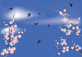 Sakura flowers and swallows in sky — Stock Vector