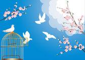Liberi colombe e fiori di ciliegio — Vettoriale Stock