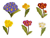 Primula collection isolated on white background — Stock Vector