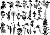 Collection of wild flowers silhouettes — Stock Vector