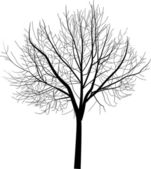 Isolated bare tree illustration — Stock Vector