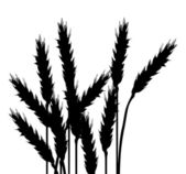 Wheat black silhouettes isolated on white — Stock Vector