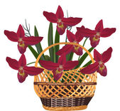 Red orchid flowers in basket — Stock Vector