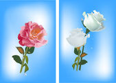 Red and white roses on blue — Stock Vector