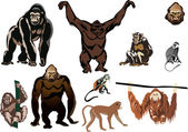 Set of brown monkeys isolated on white — Stock Vector